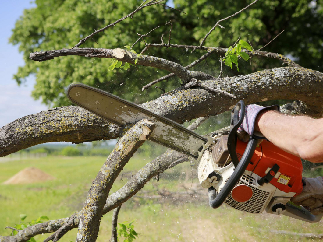Remove Hazardous Trees From Your Yard